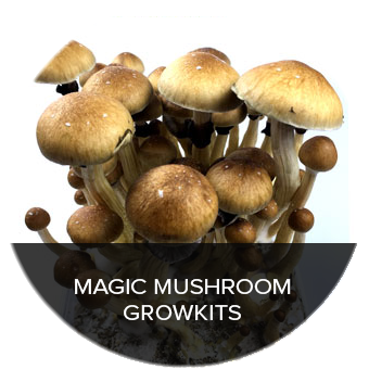 Get your Magic Mushroom Growkits at Trufflemagic